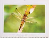 Luis Louro Fotografia - Flirckr.com - Dragonflies and Damselflies Calendario 2010